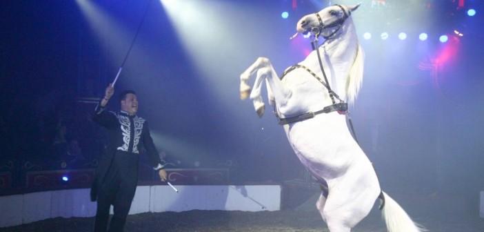 Louis-Knie-junior-paardendresseur-990x430