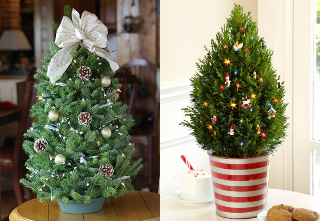 collage kleine kerstbomen echte