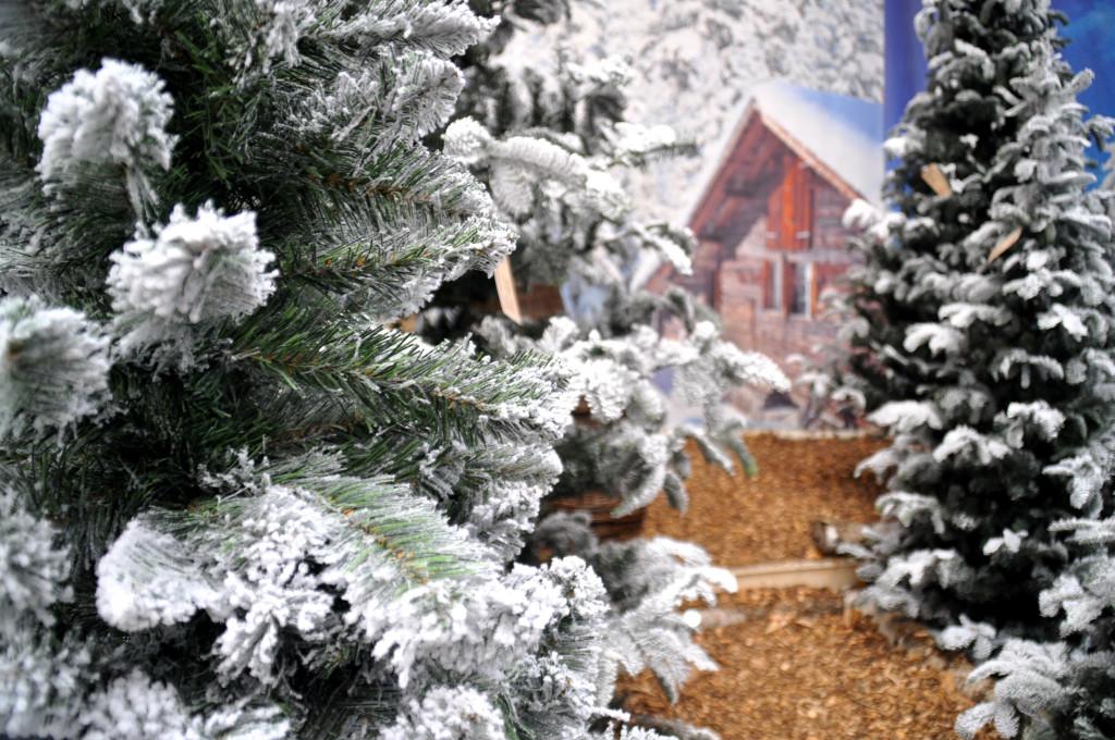 tuincentrum osdorp kerstbomen 2015