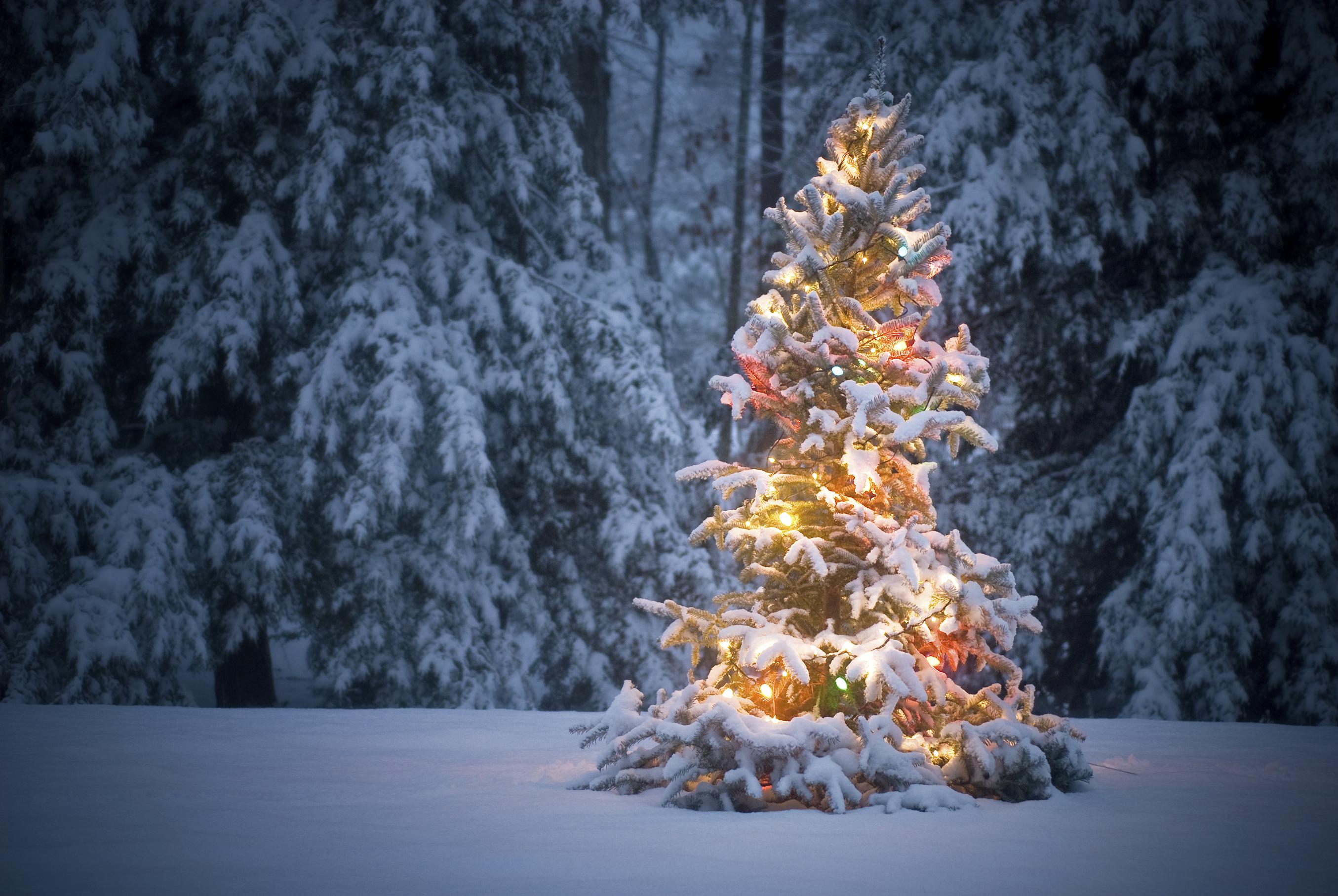 Witte Kerst Huis : Sneeuw met kerst archives christmaholic