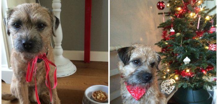 Een kerstdiner voor je hond (ja, echt!)