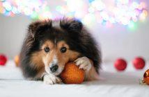 kerstdiner voor je hond