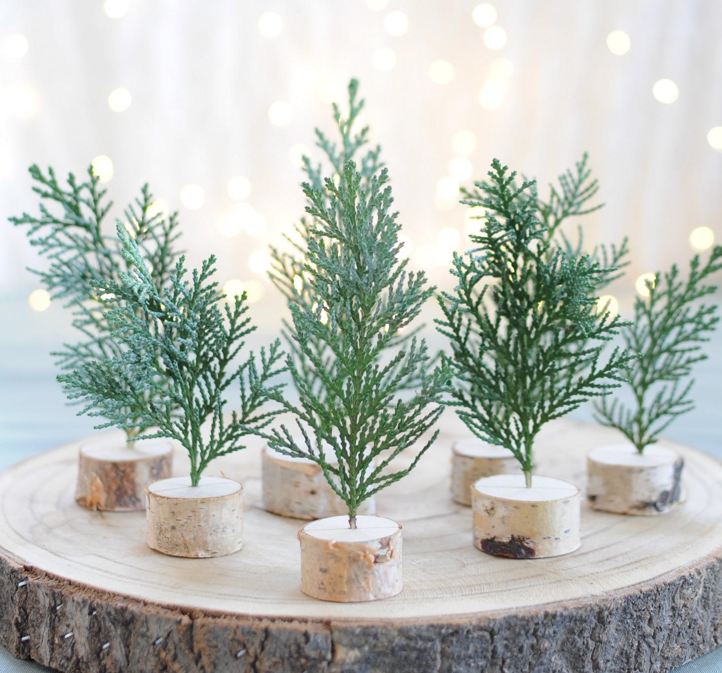 kerstboompjes maken van Conifeer