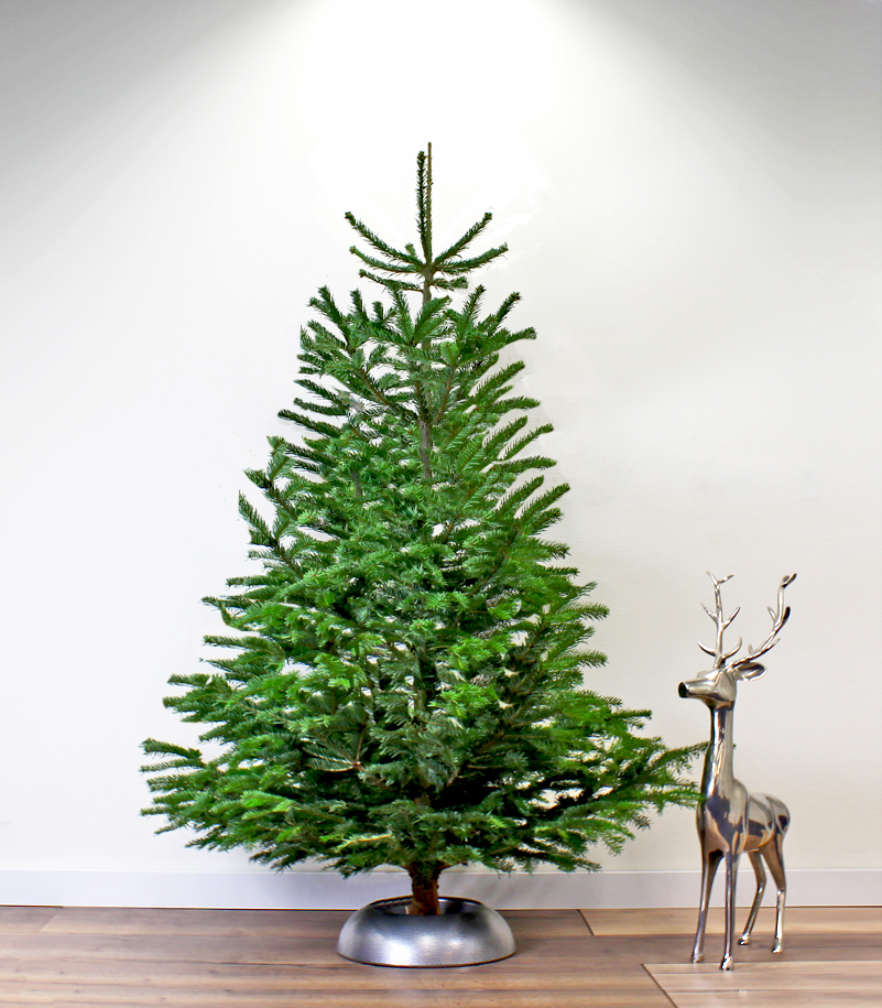 Tip Koop Je Kerstboom Op Tijd Met Vroegboekkorting Christmaholic Nl